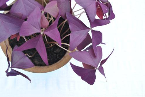 plantje toon bovenaf