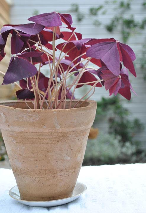 plantje toon geheel