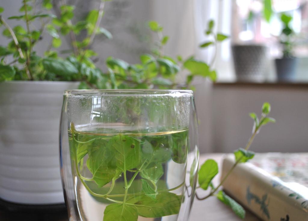 Urban Jungle Bloggers tea and plants