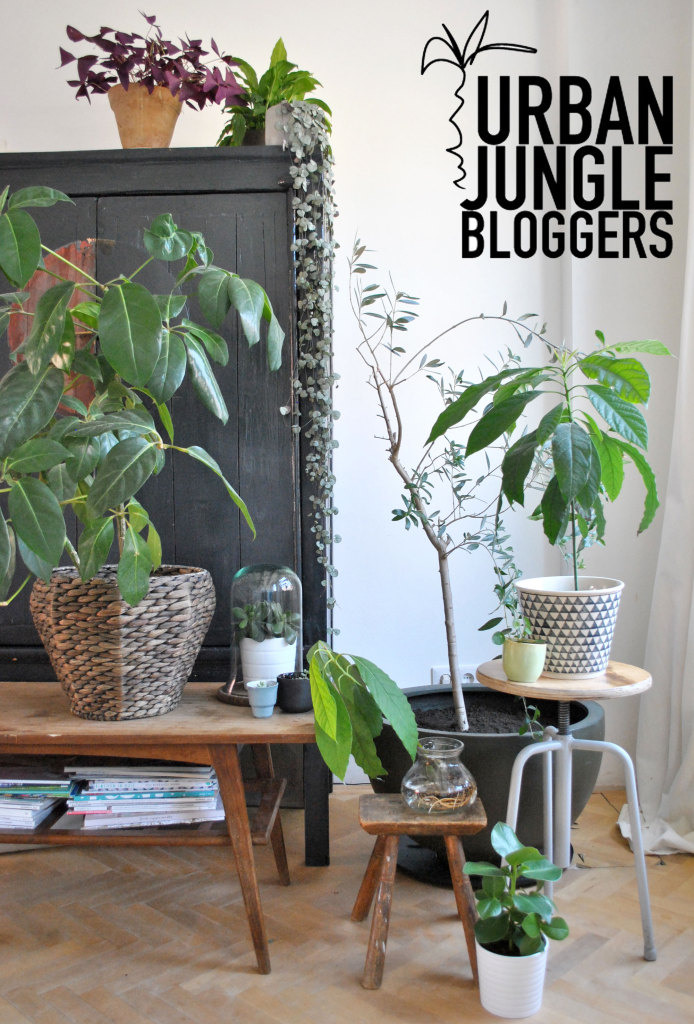 Urban Jungle Bloggers Plantgang