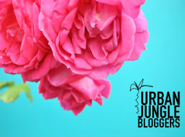 Urban Jungle Bloggers, colorpop