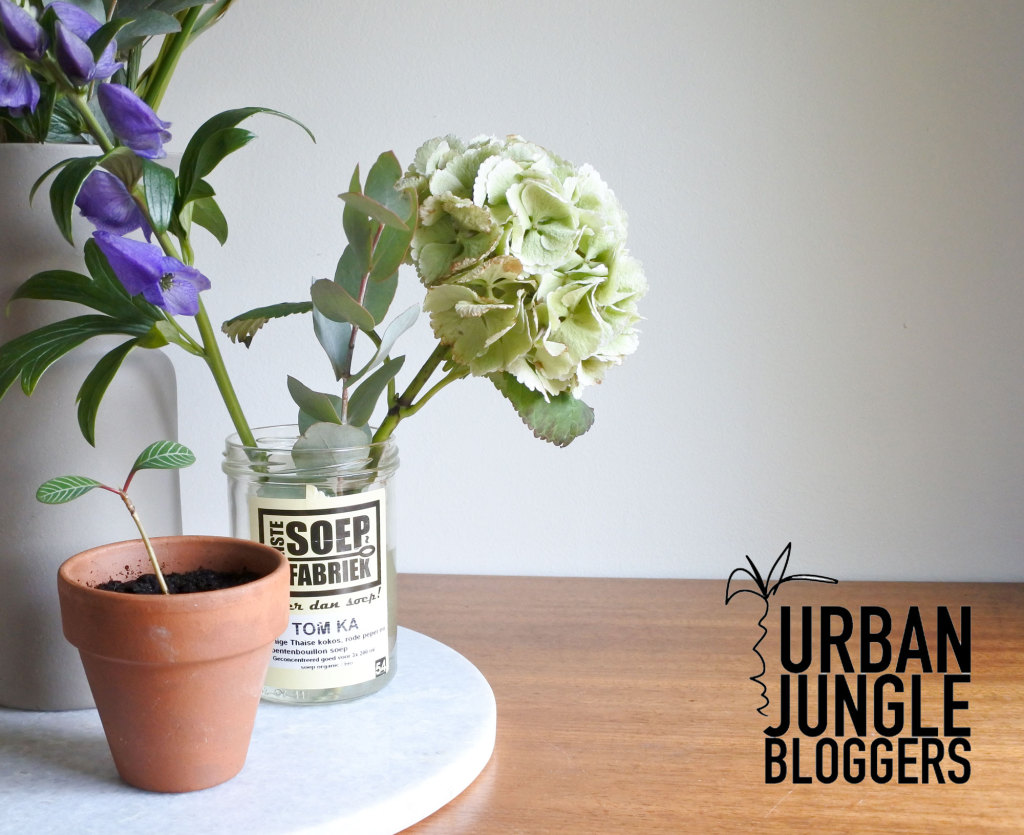 Urban Jungle Bloggers, planten en bloemen