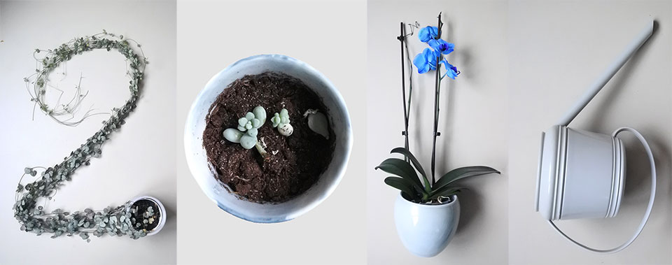 2016 in plants by Imke Verhoef
