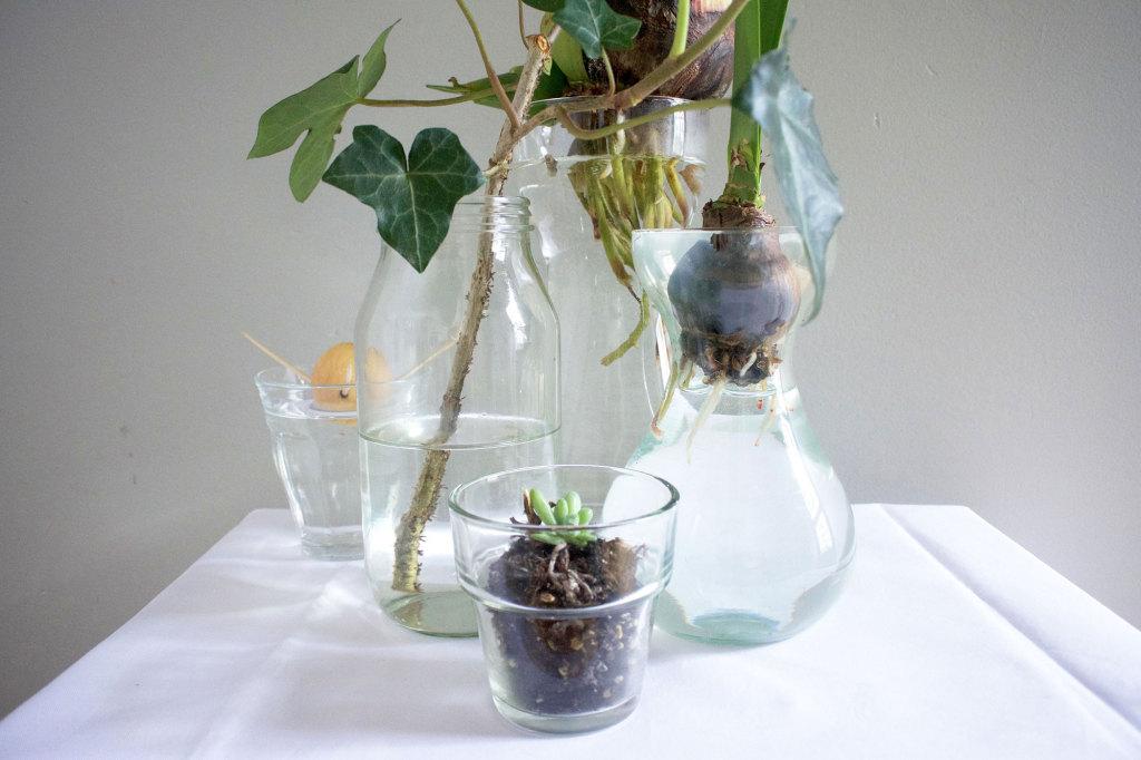 Urban Jungle Bloggers glas