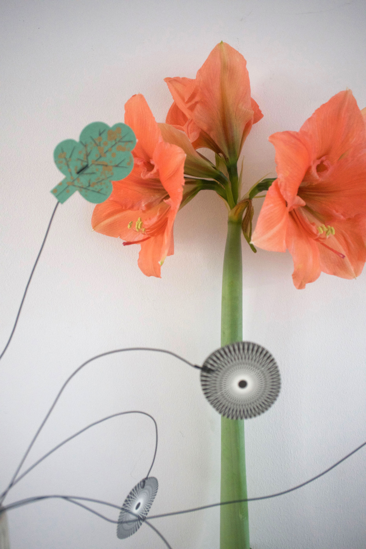 Hoe lang bloeit amaryllis