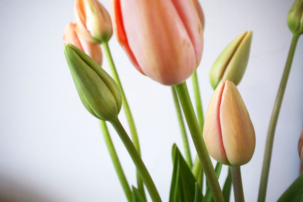 tulpen-liggend-close-up